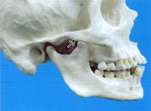 第26回歯科衛生士国家試験問題午後画像3